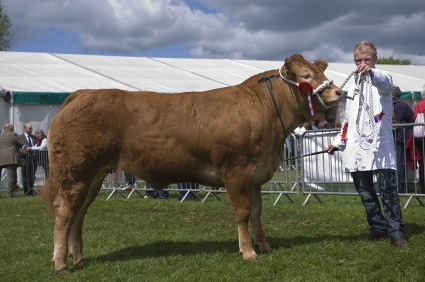 Overall Beef Champion and Champion of Champion - Glenrock Fantastic