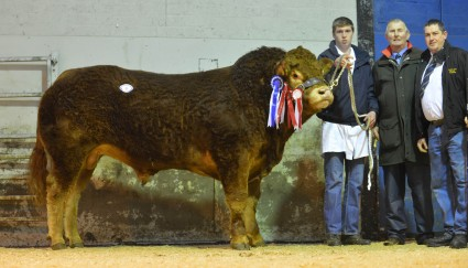 Overall Reserve Champion and Senior Champion Lisbeg Gladiator, 4,800gns