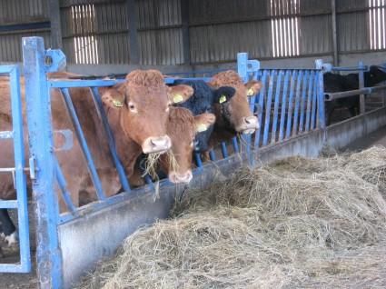 Nixon cow group