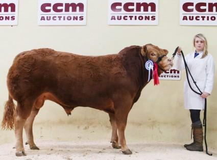 CCM Limousins Nether Hall reserve champ