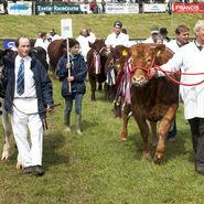 Devon County Show 2013b