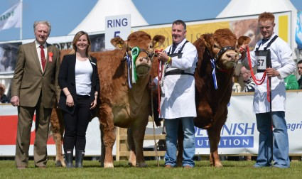 Interbreed Pairs Champions Milbrook Gingerspice & Iveagh Gilkes