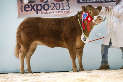 Baby Beef Champion Miss Top