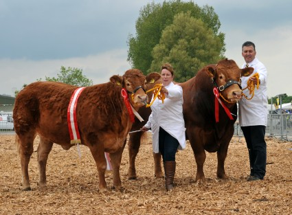 Res Burke Pair Limousins 'Foxhill Gracie & Calnagechan Giantscauseway'  From Mr & Mrs Mj Alford & Mr & Mrs NR & L Hill  Cheddar