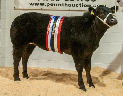 Watabootie pictured at Penrith Potential Sale £5,200