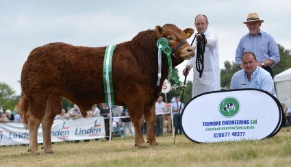 Bull Champion Lynderg Hero