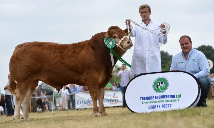 Bull Reserve Champion Donnelly Hernando