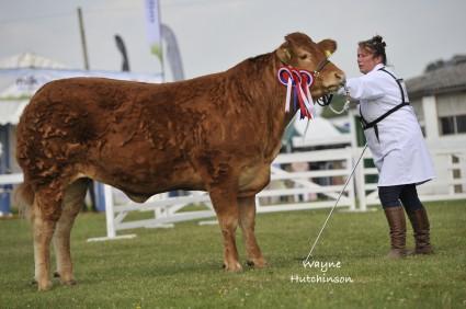 Interbreed Champion at the 2013 Yorkshire Show Foxhillfarm Gracie
