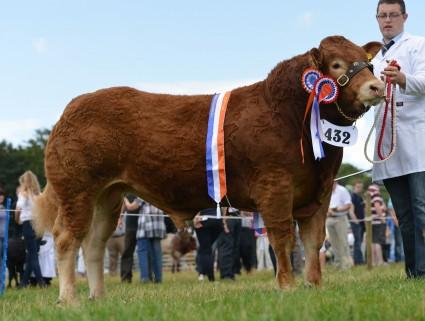 Bull Champion Gorrycam Hunter