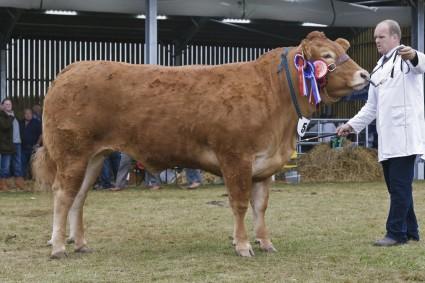 Overall Reserve & Female Champion Glenrock Fantastic