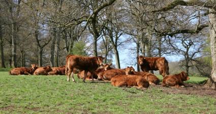 Roche Court Farm