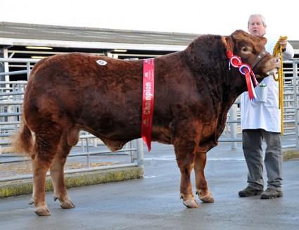 2012 Top Price Killerton Gerald 8900gns