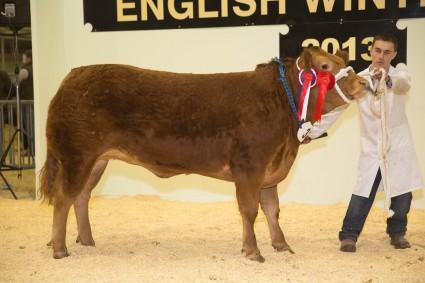 Pedigree Limousin Champion & Reserve Overall Pedigree Champion Cwmlimo Harriet