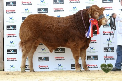 Reserve Overall Senior Continental and Overall Senior Limousin Champion Roxburgh Homeland from John Elliot