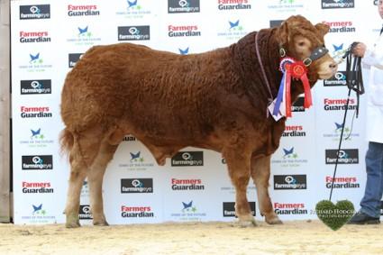 Reserve Overall Senior Continental and Overall Senior Limousin Champion Roxburgh Homeland