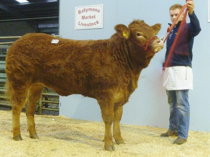 Robineed Hotpants 3,400gns
