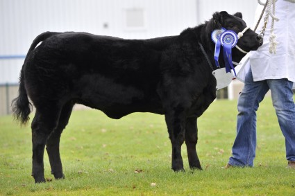 Bonnie Betty Reserve Baby Beef Champion