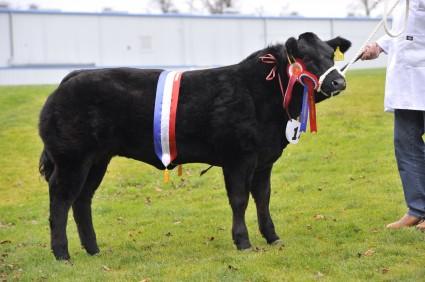 Ciara Baby Beef Champion