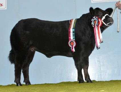 Mojo Commercial Champion & Reserve Overall