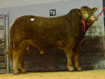 Carmorn Hitchhiker 3300gns