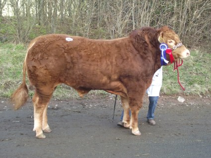 Dinmore Hocco Reserve Champion 3,500gns
