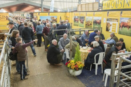 Limousin Society Stand at Agri Expo