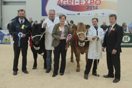 Reserve Champion Steer Stevie Gee (37 Neil Slack) & Champion Steer Maybe This Time (47 James Nisbet)
