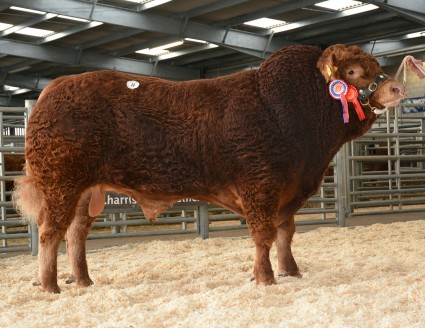 Wilodge Inform 7500gns