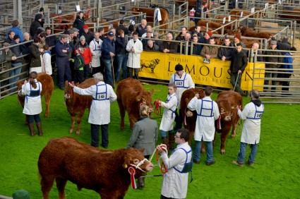 Ringside at the Calf Spectacular