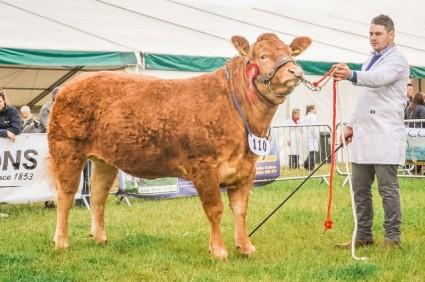 Breed Champion Tweeddale Harika