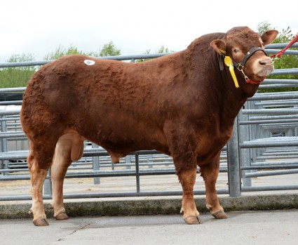 Loosebeare Insult 5,00gns