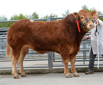 Garyvaughan Italy 7,000gns