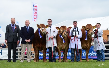 Linden Foods Beef Interbreed Champ