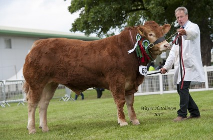 Maraiscote Jura - res Male Champion