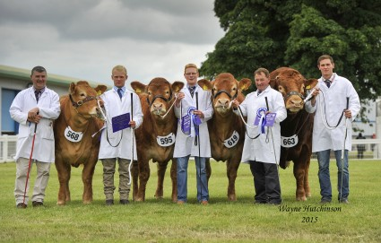 Limousin Team of Four