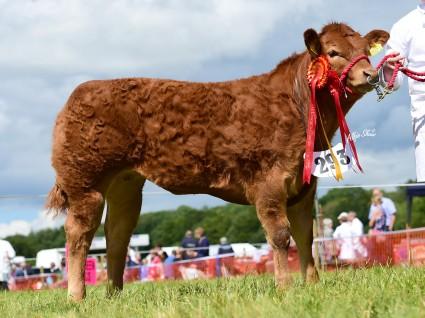 Champion Calf Millgate Lucy