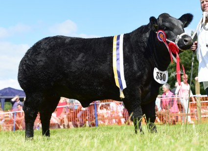 Commercial Champion Black Ice