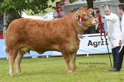 Dinmore Glorious - Res Female and Reserve Overall