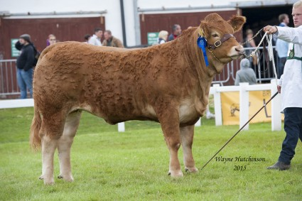Glenrock Jadore - Res Junior Champion.