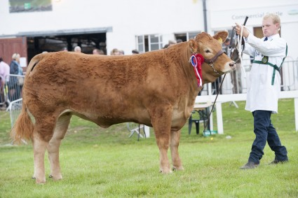 Glenrock Jewel - Junior Champion