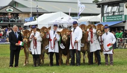 Limousin Team of Five winners