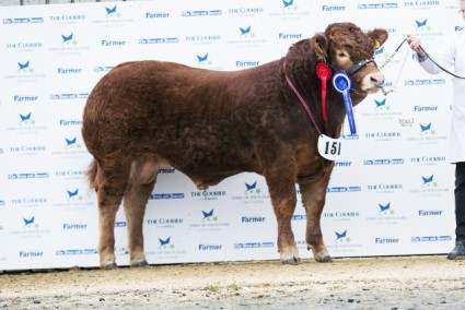 Foxhillfarm Lionking - Reserve Overall & Junior Male Championship