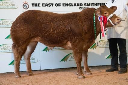 Pure Continental Champion from Tecwyn Jones