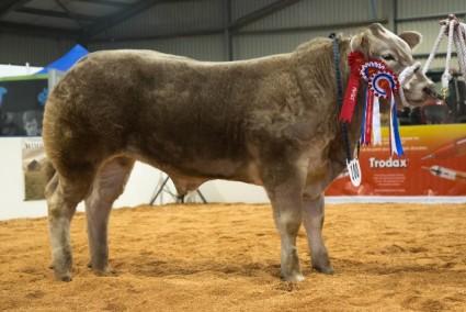 Steer Champion - Shaken Not Stirred from Jennifer Hyslop