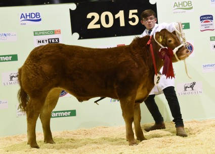 Reserve Baby Beef Champion Dolfy Duke from J A Nicholls.