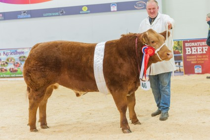 Reserve Overall and Champion steer