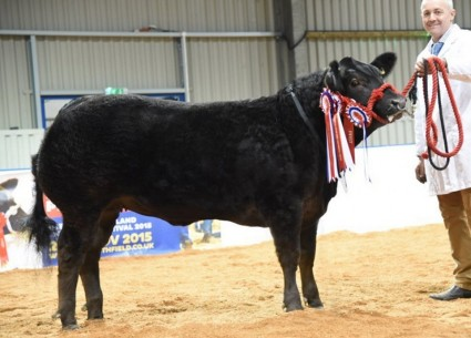 French Kiss the 2015 Smithfield Champion from Frank Page, Northants.