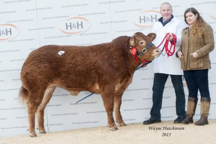 Brenmick Joy - 10,000gns. Maiden heifer champion. Wayne Hutchinson / www.farm-images.co.uk