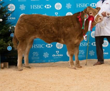 Champion Baby Beef & Baby Beef Heifer - Jeanie - Mr JA Hollingsworth