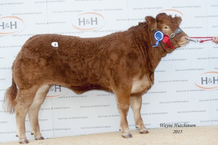 Goldies Inchantress - Res Overall Champion - 8000gns. Wayne Hutchinson / www.farm-images.co.uk